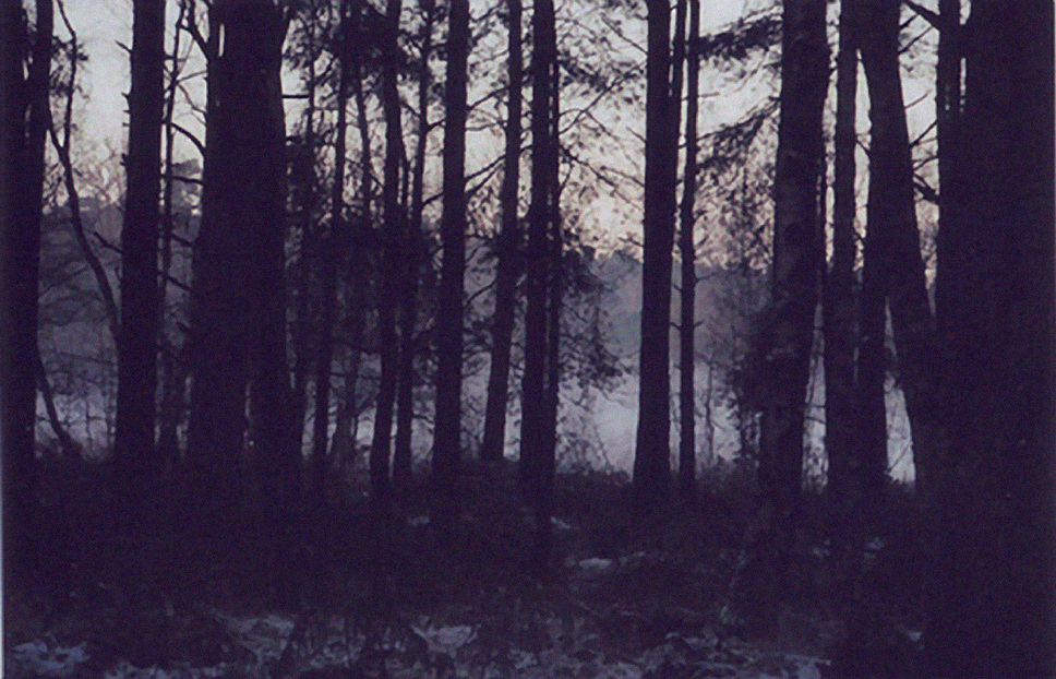 Photo of a lake at sunrise in a forest with the Dark silhouette of trees